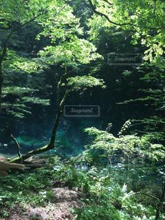 自然の写真・画像素材[603683]