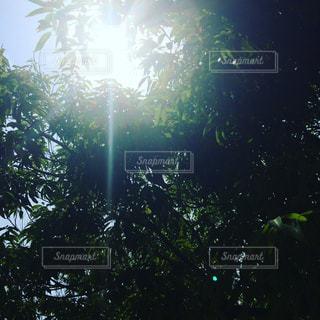 空の写真・画像素材[602919]