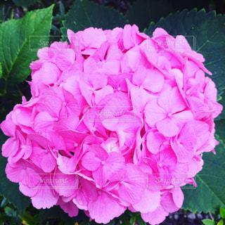 花の写真・画像素材[602920]