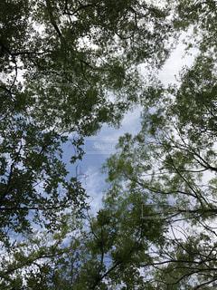 空の写真・画像素材[602932]