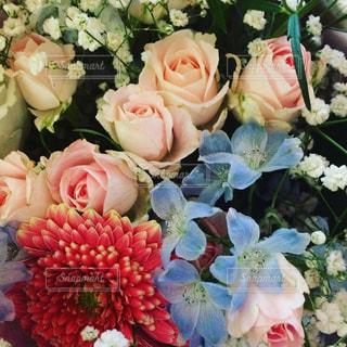 花の写真・画像素材[606974]