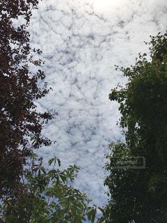 空の写真・画像素材[606982]