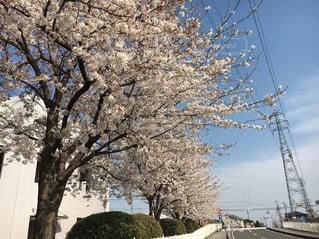 春の写真・画像素材[619761]