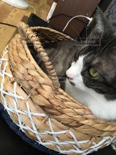 猫の写真・画像素材[640166]
