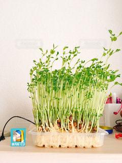 テーブルの上の花の花瓶の写真・画像素材[1276341]