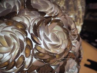 貝殻の写真・画像素材[603404]
