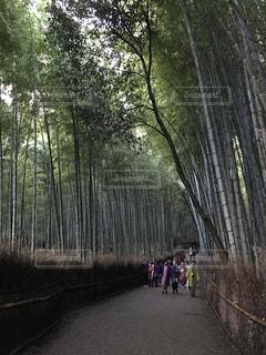 京都の写真・画像素材[603935]
