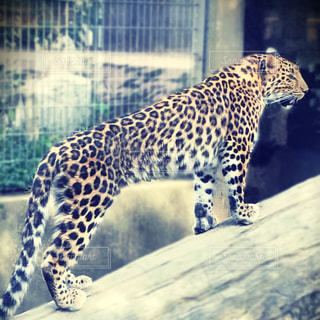 動物 - No.674595