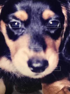 犬 - No.613332