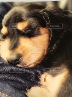 犬 - No.613334