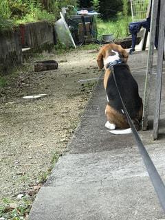 犬 - No.613350