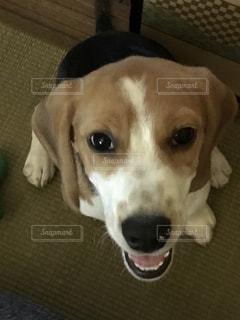 犬 - No.619712