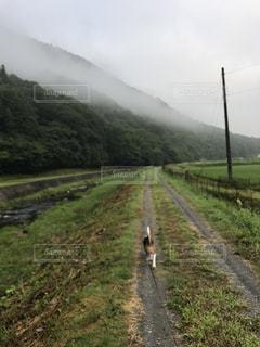 犬 - No.619733