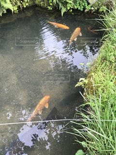 魚 - No.619737