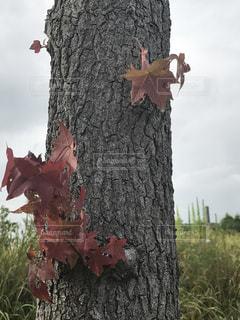 ピンクの花の木 - No.727835