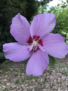 近くの花のアップ - No.735837