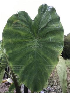 緑の植物 - No.735857