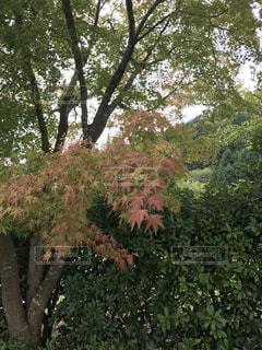 ピンクの花の木 - No.735858