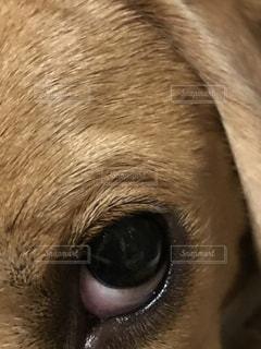 近くに犬の顔のアップ - No.735867