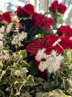 花をクローズアップするの写真・画像素材[2776253]
