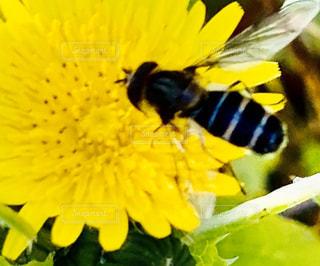 黄色い花の写真・画像素材[2803773]