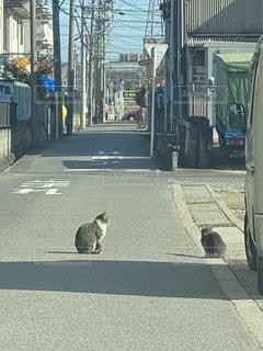 街の通りを歩いている猫の写真・画像素材[2881897]