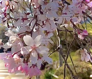 植物の上のピンクの花の写真・画像素材[2944001]