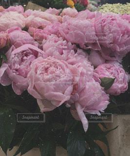 花の写真・画像素材[604044]