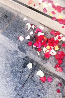 花の写真・画像素材[605775]