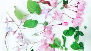 花の写真・画像素材[609105]