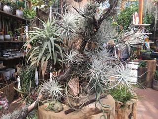 観葉植物たくさんの写真・画像素材[612799]