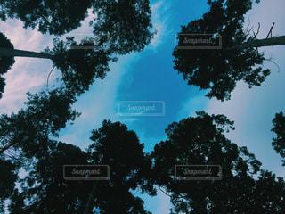 自然の写真・画像素材[630095]