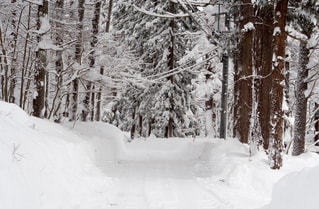 雪と森林 - No.969438