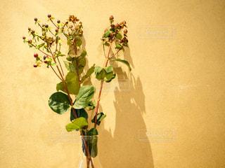 紫色の花一杯の花瓶の写真・画像素材[1011562]