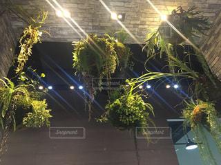 観葉植物 インテリアの写真・画像素材[1068569]