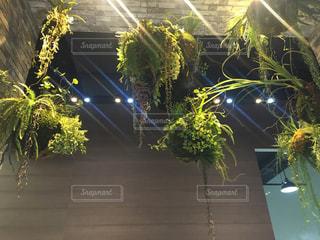 観葉植物 インテリアの写真・画像素材[1068570]