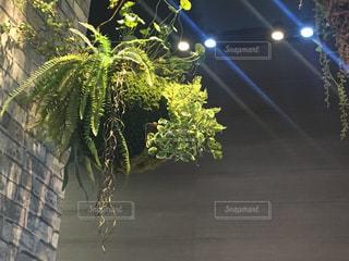 観葉植物 インテリアの写真・画像素材[1068571]