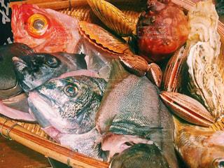魚介類の写真・画像素材[1137156]