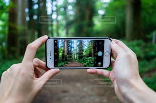 箱根旧街道の杉並木の写真・画像素材[1386347]