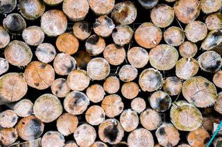 スギの木材の写真・画像素材[1498709]