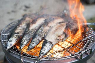 秋が旬の秋刀魚の写真・画像素材[1498736]