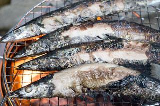 秋が旬の秋刀魚の写真・画像素材[1498738]