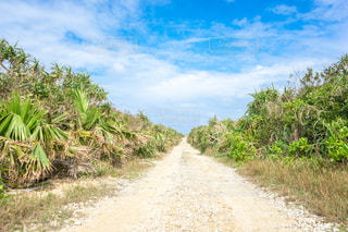 木の隣に土の道沖縄の久高島の写真・画像素材[1565147]