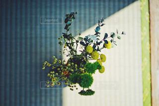 真上からの花の写真・画像素材[2048858]