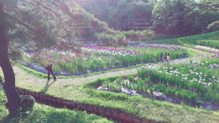 花の写真・画像素材[664721]