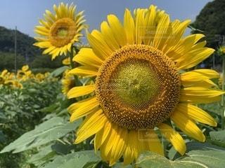 花の写真・画像素材[2663680]