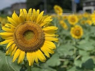 花の写真・画像素材[2663681]