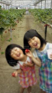 子供の写真・画像素材[605369]