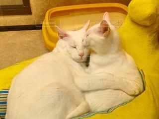 猫の写真・画像素材[50611]