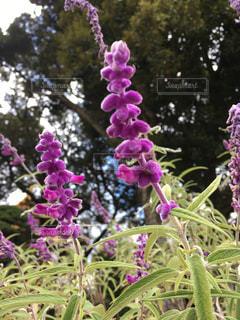 花の写真・画像素材[604764]